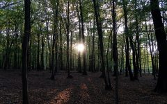 hora_les_stromy_slnko_priroda