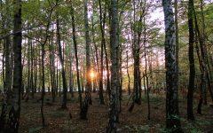 les_stromy_breza_priroda