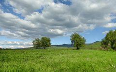 obloha_stromy_jar