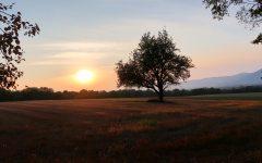 zapad_slnka_strom_priroda